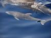 delphinjunges