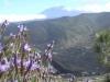 blick-auf-teide-mit-berglavendel