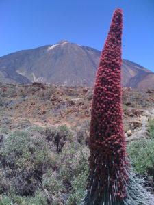 55. Teide